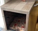 Hondenbench-ombouw-Ronald-Riet