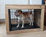 Hondenbench-ombouw-ronald-Eddy