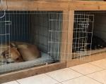 Hondenbench ombouw ronald nele