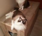 Kattenbakkast Marinanne Nadine